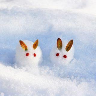 雪うさぎ1